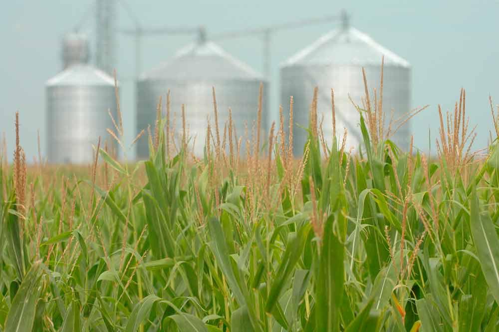 silos para grano - Silos de Almacenamiento